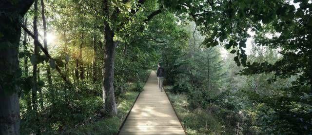 Подвесной парк в лесу