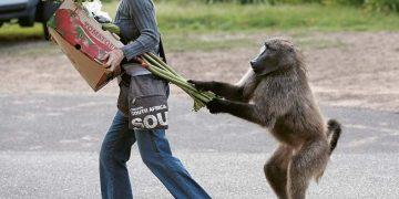 Преступники животного мира