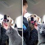 Отношения между кошками и собаками