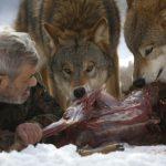 Волки умнее собак