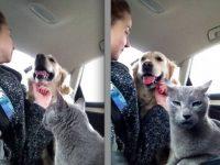 Прикольные фото с кошками и собаками