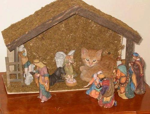 Коты в рождество