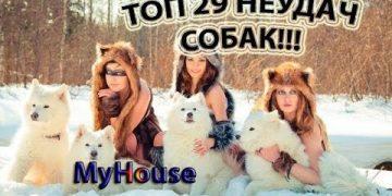 ТОП 29 НЕУДАЧ СОБАК!!! С ДРУЗЬЯМИ МЕНЬШИМИ ТОЖЕ СЛУЧАЮТСЯ ФЭЙЛЫ!!! MyHouse #125 ДЕКАБРЬ 2017