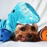 Звезда Инстаграма, очаровательная собачка