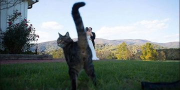 Смешные свадебные фотографии (20 фото)