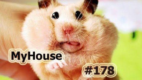 ПОДБОРКА ПРИКОЛОВ--НА ИСПУГЕ--ИСПУГ, НЕУДАЧИ, ФЕЙЛЫ!!! MyHouse #178 ФЕВРАЛЬ 2018