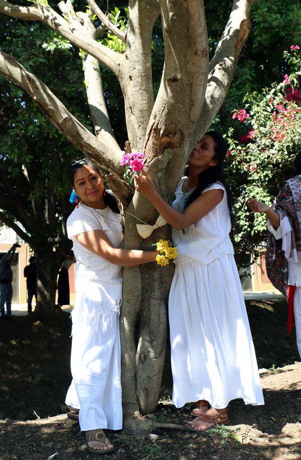 На массовой свадьбе мексиканки вышли замуж за деревья (7 фото)