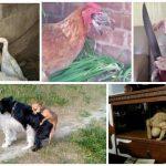 Что они творят, эти необыкновенные животные? (34фото)