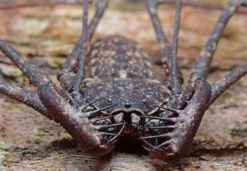 ТОП-25: Самые страшные животные, от которых следует бежать