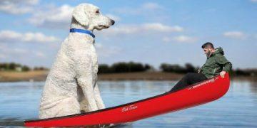 Собака Жужи в фотографиях американского фотографа (25 фото)