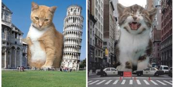 Гигантские коты заполонили города (13фото)