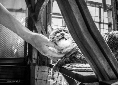 Кошачий рай итальянского фотографа Марианна Дзампиери (19 фото)