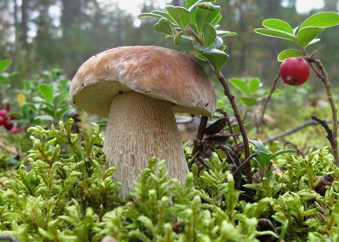 что такое грибы