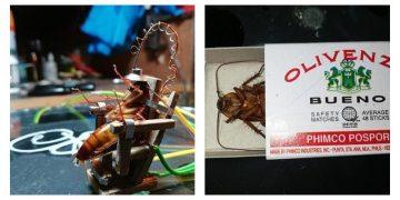 Филиппинец построил электрический стул для таракана и устроил показательную казнь (4фото)