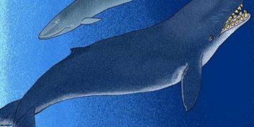 Топ-10: удивительные и уже вымершие животные, о которых люди почти не вспоминают или вовсе не знают