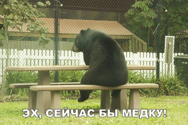 Смешные фото и прикольные картинки (20 фото)