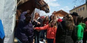 Самая высокая лошадь в мире (6 фото)