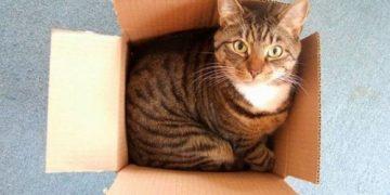 Почему кошки так любят коробки (26 фото)