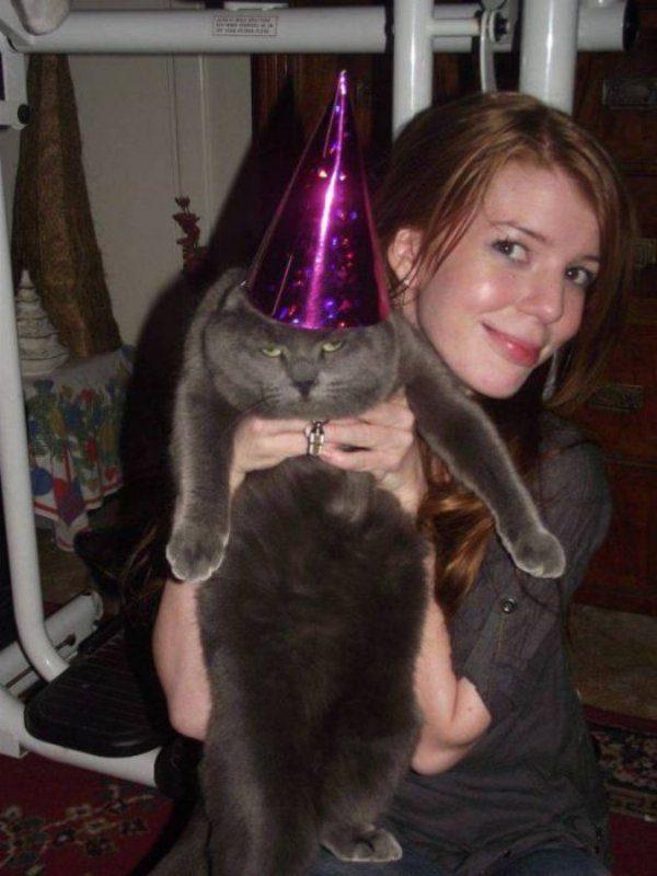 Смешные картинки про котов (42 фото)
