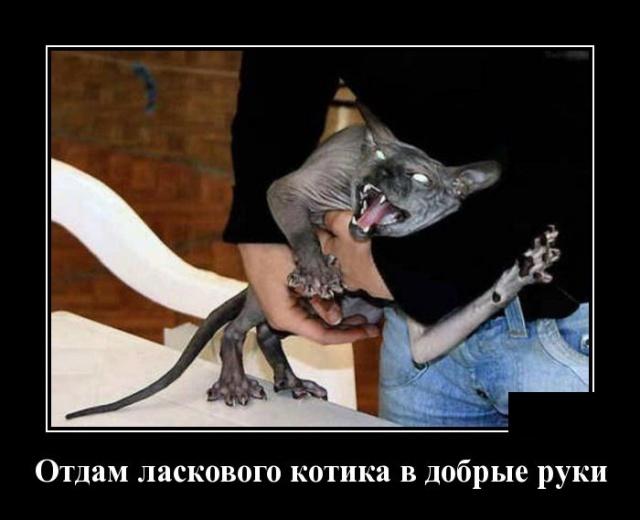 Новые смешные демотиваторы: отдам ласкового котика в хорошие руки