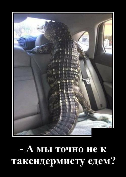 Новые смешные демотиваторы: а мы точно не к таксидермисту едем