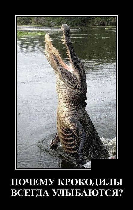 Новые смешные демотиваторы: почему крокодилы всегда улыбаются