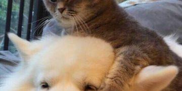 Картинки милых и смешных котиков (150 фото)