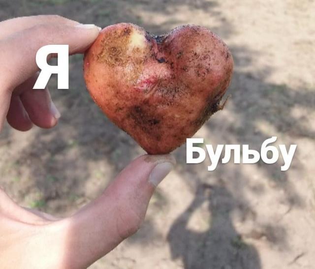 Картофельная лихорадка в Белоруссии (38 фото)