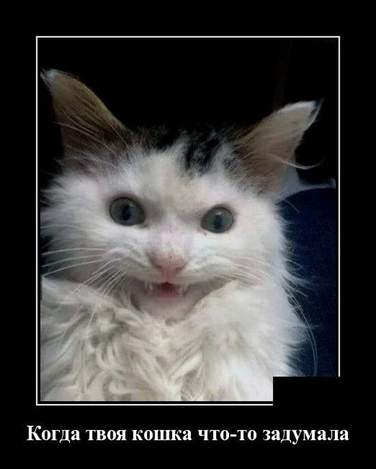 Новые смешные демотиваторы: когда твоя кошка что-то задумала