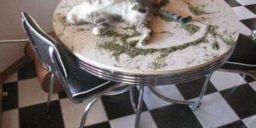 Как себя ведут коты, нализавшись валерьянкой (8 фото)