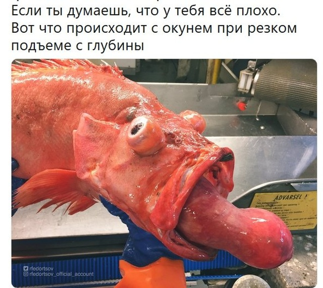 Мемы и смешные картинки без смысловой нагрузки (32 фото)