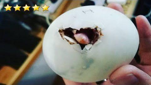 Обычное яйцо из ресторана. Теперь у женщины живет нетипичный питомец