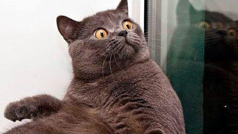 Я РЖАЛ ПОЛЧАСА. Смешные Коты и Котики.
