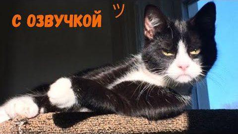 Лютые приколы с котами и кошками (МатроскинТВ)